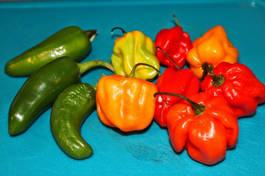 selection-chillies